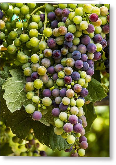 Mountain Valley Greeting Cards - The Art of Wine Grapes Greeting Card by Teri Virbickis