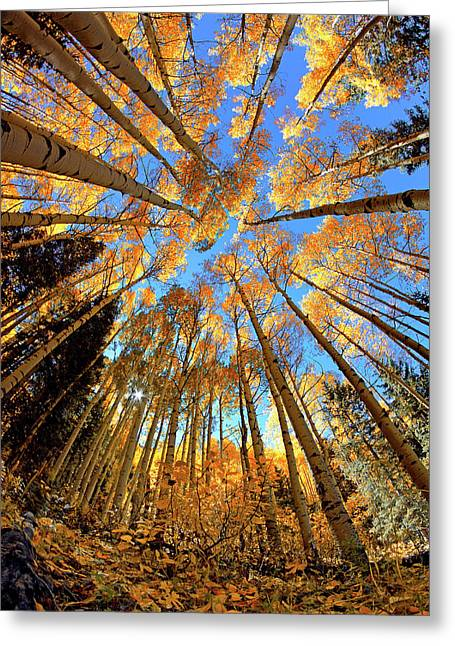 Greeting Card featuring the photograph The Aspens Above - Colorful Colorado - Fall by Jason Politte