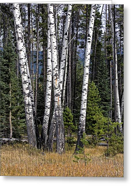 The Aspens Greeting Card