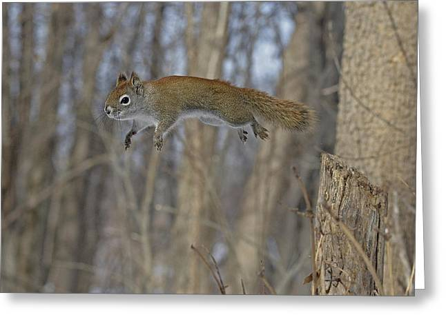 The Athletic Red Squirrel Greeting Card