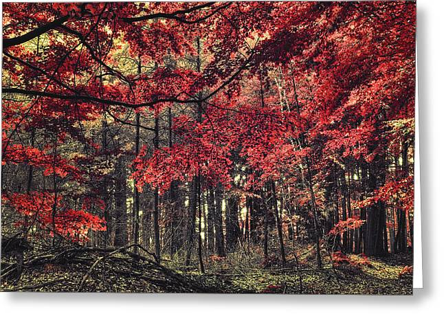 The Autumn Colors Greeting Card