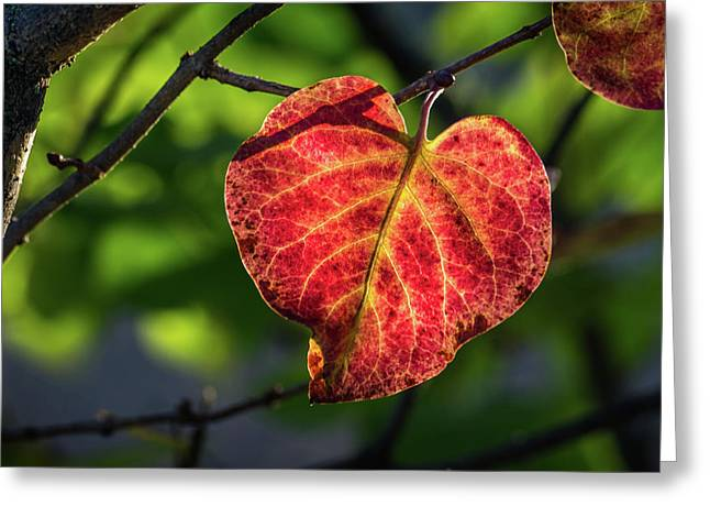 Greeting Card featuring the photograph The Autumn Heart by Bill Pevlor
