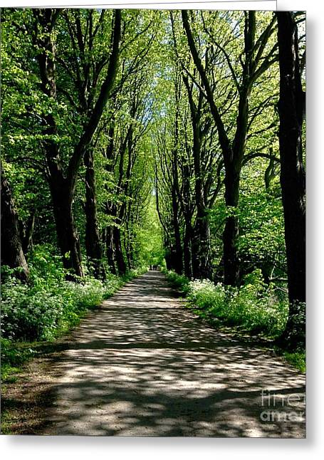 The Avenue Of Limes At Mill Park 3 Greeting Card