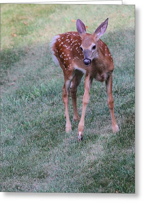 The Bambi Stance Greeting Card by Karol Livote