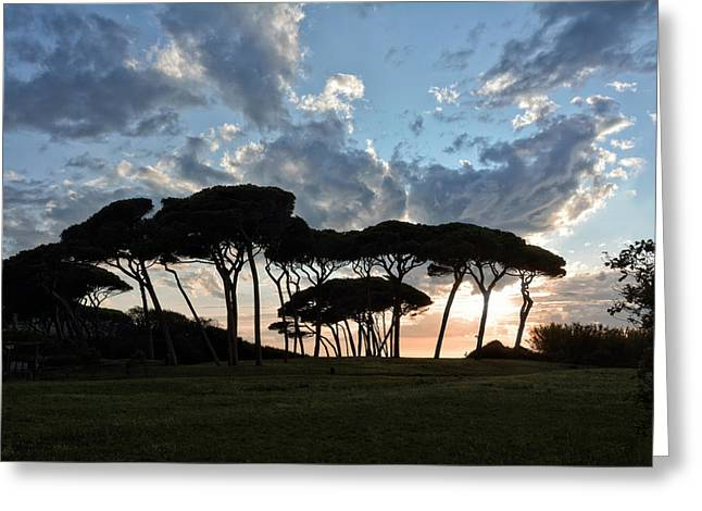 The Baratti Pine Trees Greeting Card by Joachim G Pinkawa