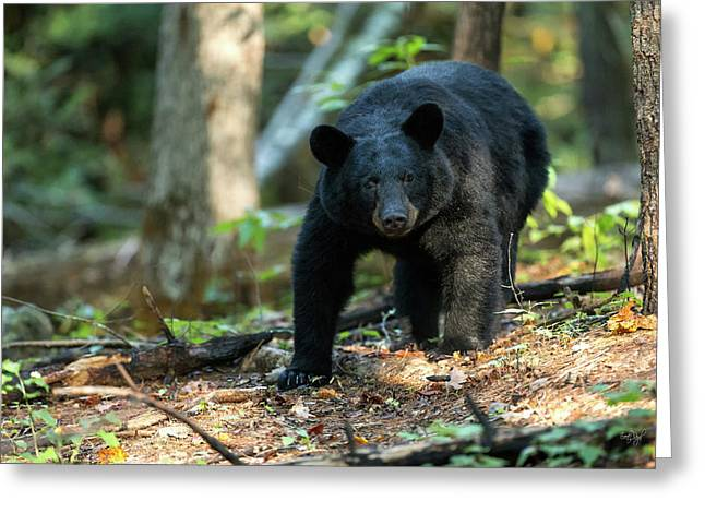 Greeting Card featuring the photograph The Bear by Everet Regal