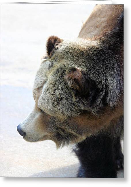 The Bear Greeting Card by Karol Livote