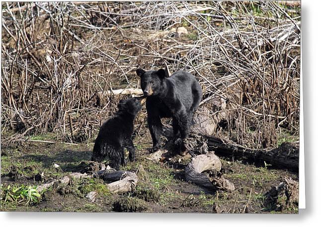 The Bears IIi Greeting Card
