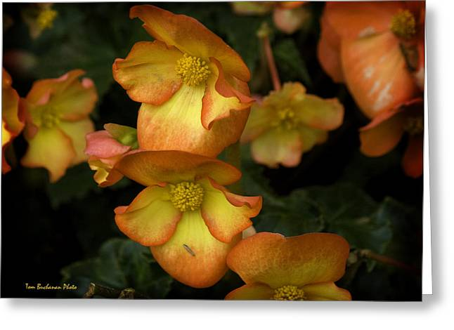 The Beautiful Begonia Greeting Card