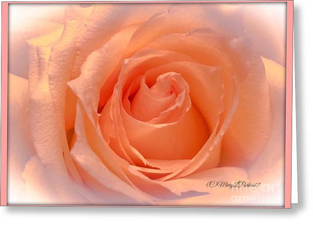 The  Beauty Of A Rose  Copyright Mary Lee Parker 17,  Greeting Card
