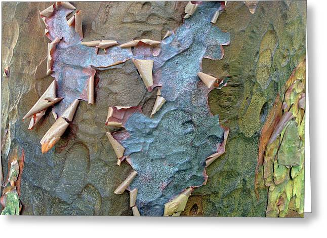 The Beauty Of Bark Greeting Card by Jessica Jenney