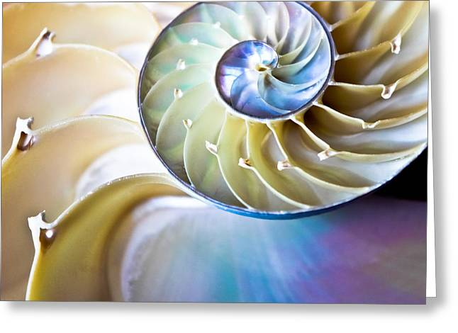 The Beauty Of Nautilus Greeting Card