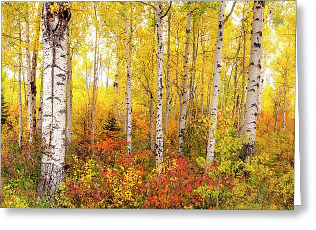 Greeting Card featuring the photograph The Beauty Of The Autumn Forest by Tim Reaves