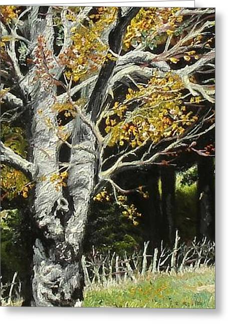 Landscape Posters Greeting Cards - The Beech Greeting Card by Sorin Apostolescu