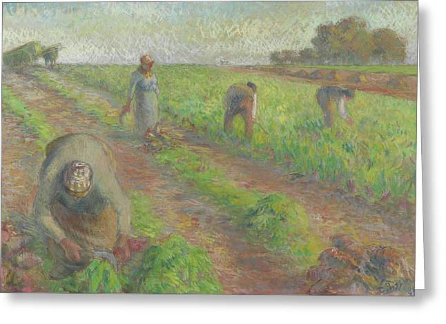 The Beet Harvest Greeting Card by Camille Pissarro