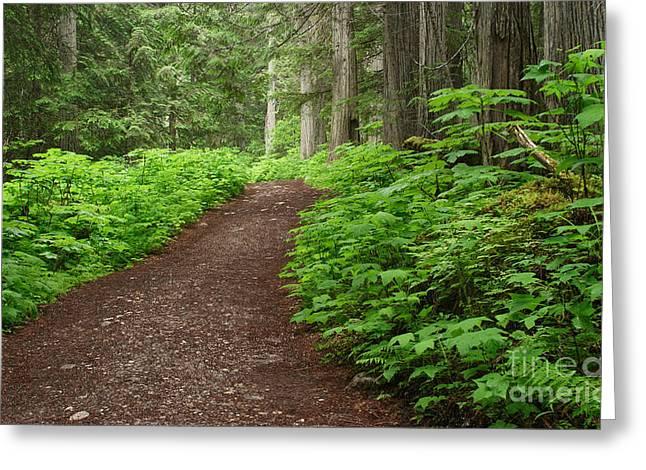 The Berg Lake Trail Greeting Card