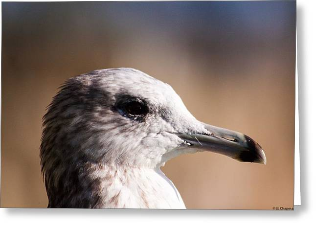 The Best Side Of The Gull Greeting Card