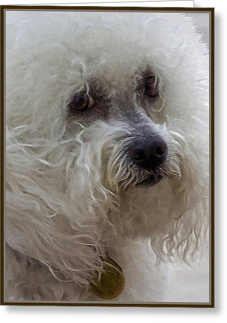 The Bichon Frise Greeting Card by Lynn Andrews
