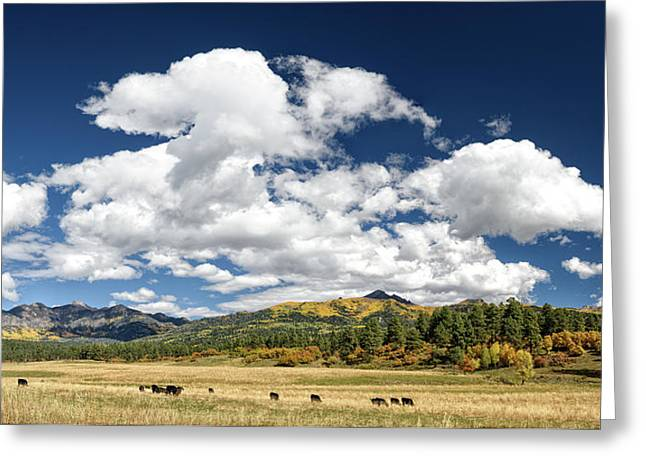 The Big Picture Greeting Card by Cathy Neth