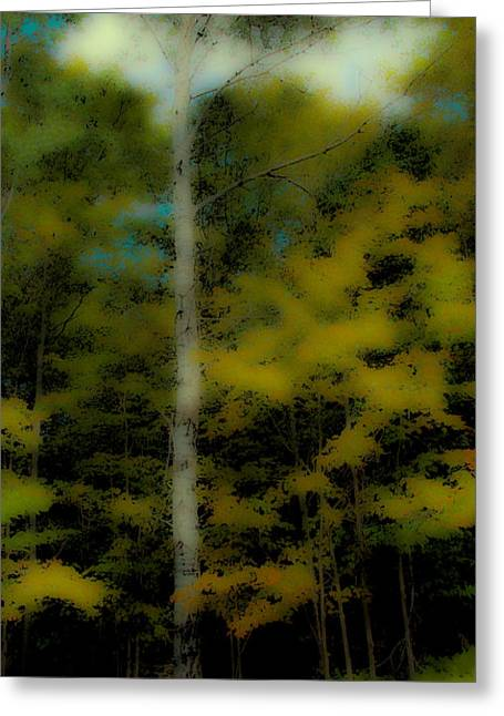 The Birch On Maple Ridge Greeting Card by David Patterson
