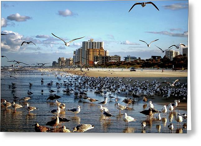 Greeting Card featuring the photograph The Birds by Jim Hill
