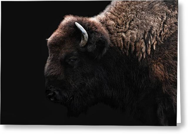 The Bison Greeting Card by Joachim G Pinkawa
