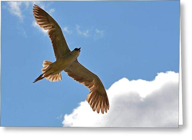 The Black-crowned Night-heron Like An Angel In The Sky Greeting Card by Asbed Iskedjian