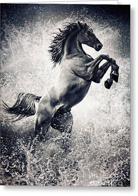 The Black Stallion Arabian Horse Reared Up Greeting Card by Dimitar Hristov