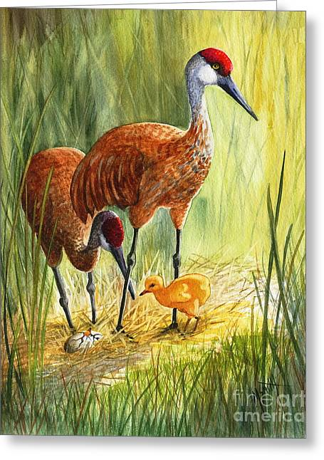 The Blessed Event - Sandhill Cranes Greeting Card by Marilyn Smith