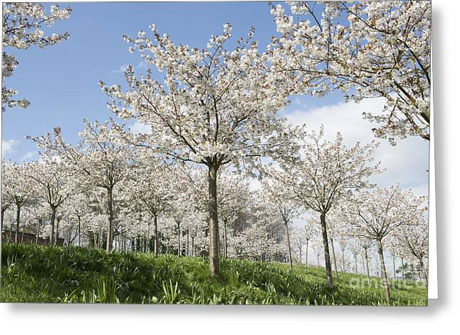 The Blossoming Of Spring Greeting Card by Tim Gainey