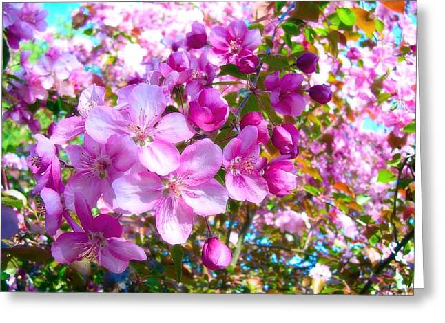 The Blossoms Of Spring Greeting Card