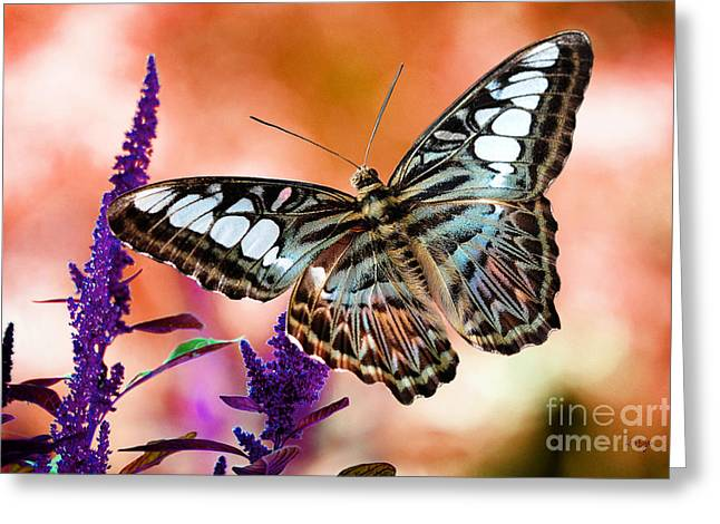 Clippers Digital Art Greeting Cards - The Blue Clipper Greeting Card by Lois Bryan