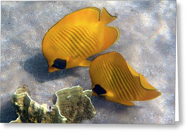 The Bluecheeked Butterflyfish Greeting Card