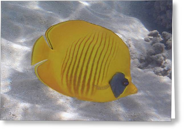 The Bluecheeked Butterflyfish Red Sea Greeting Card