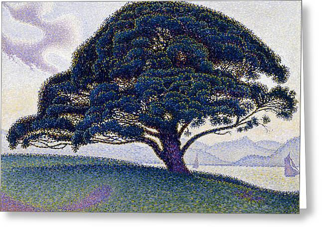 The Bonaventure Pine In Saint Tropez Greeting Card by MotionAge Designs