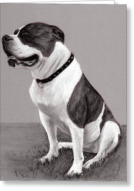 The Boss - Portrait Of An American Bulldog Greeting Card by Ruthie K Sutter