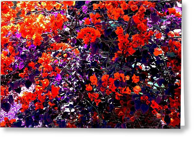 The Bougainvillea Poster Greeting Card by Juana Maria Garcia-Domenech
