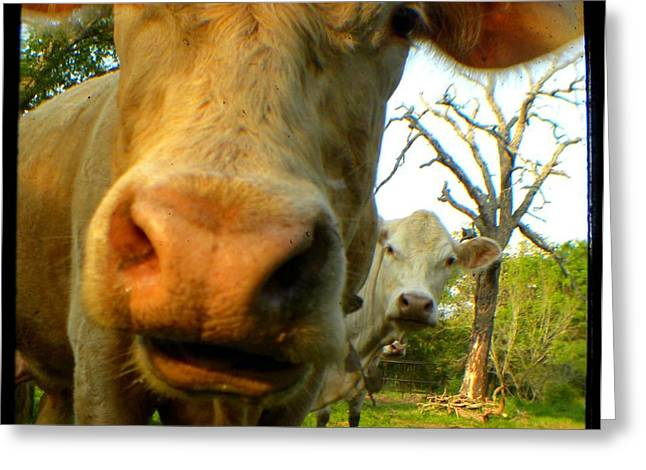 The Breeland Herd Greeting Card by Melissa Wyatt