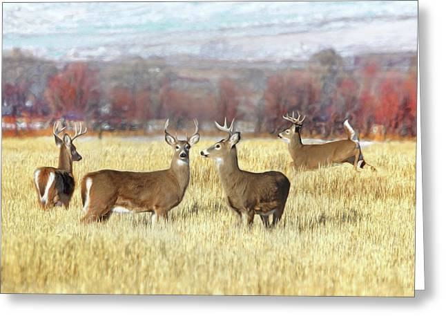 Greeting Card featuring the photograph The Bucks Stop Here White-tail Deer  by Jennie Marie Schell