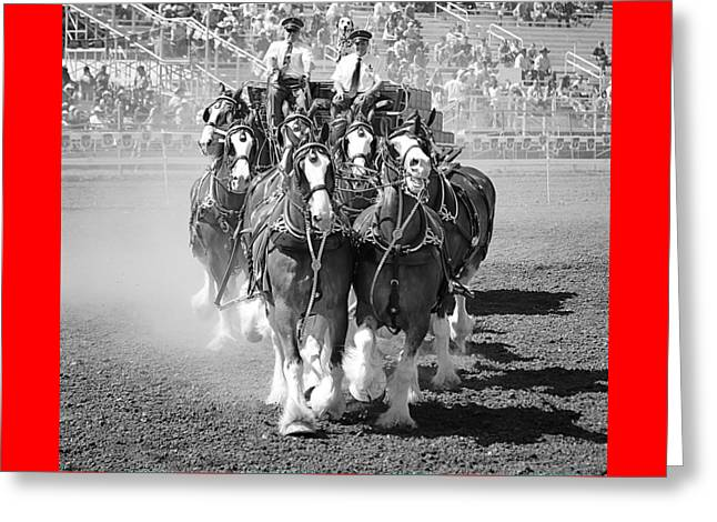 The Budweiser Clydesdales Greeting Card