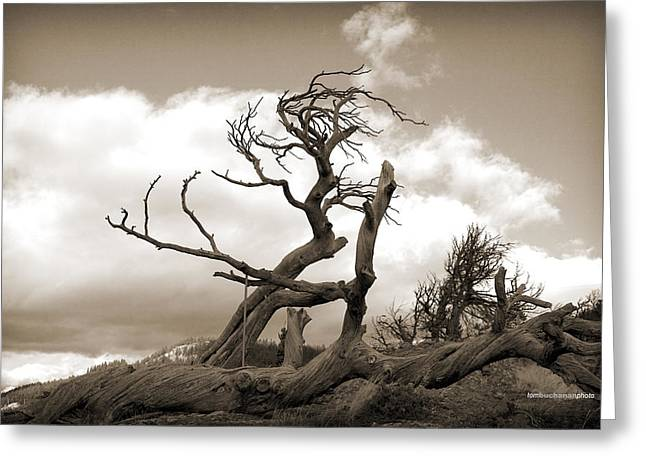 The Burmis Tree Greeting Card