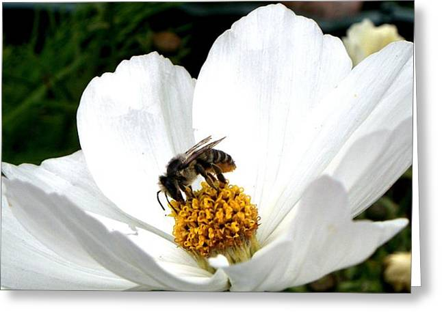 Greeting Card featuring the photograph The Busy Bee by Carol Grimes