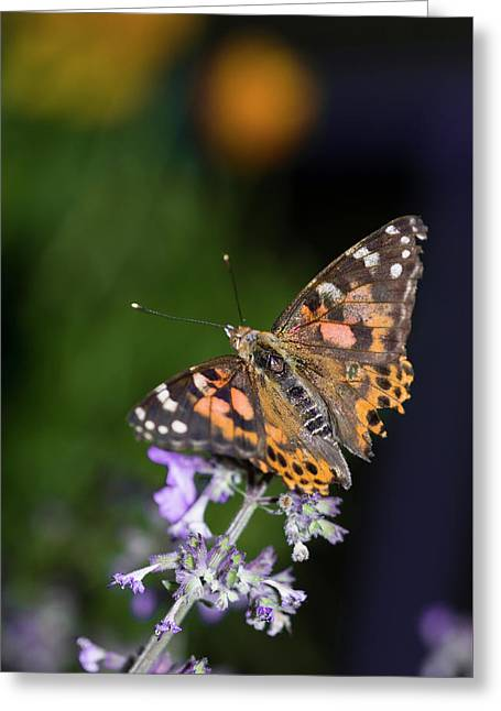 Greeting Card featuring the photograph The Butterfly Effect by Alex Lapidus