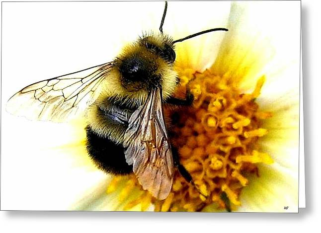 The Buzz Greeting Card by Will Borden