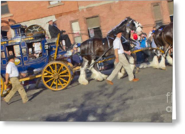 The Calgary Stampede Carriage Greeting Card by Donna Munro