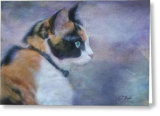 The Calico Staredown  Greeting Card by Colleen Taylor