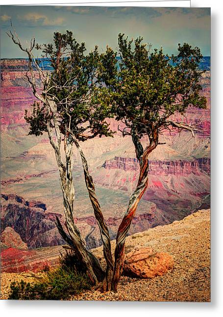 The Canyon Tree Greeting Card by Tom Prendergast