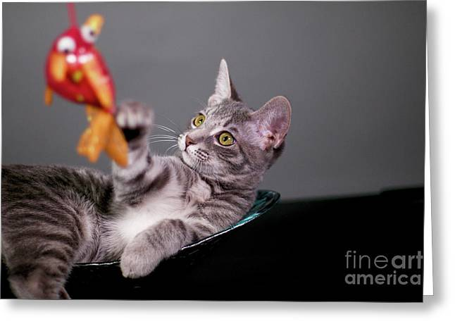 The Cat And The Fish Greeting Card