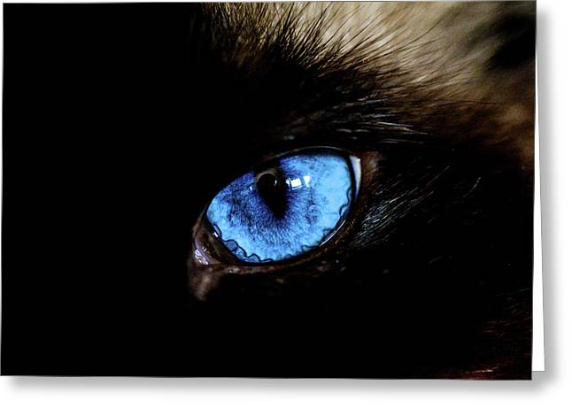 The Cat Eye Greeting Card