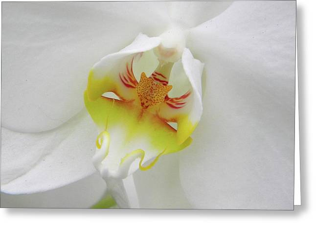 Greeting Card featuring the photograph The Cat Side Of An Orchid by Manuela Constantin